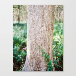 Climbing Vine on a Cypress Tree / Florida Fine Art Film Photography Canvas Print