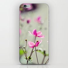 Pink Anemones iPhone & iPod Skin