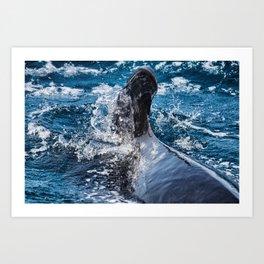 Long-Finned Pilot Whale, Calderon comun (Globicephala melas) Art Print