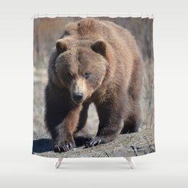 Alaskan Grizzly Bear - Spring Shower Curtain
