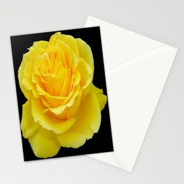 Beautiful Yellow Rose Flower on Black Background Stationery Cards