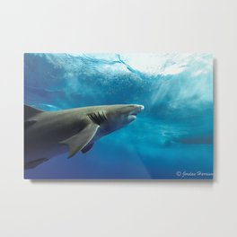 Lemon Shark Rising Metal Print