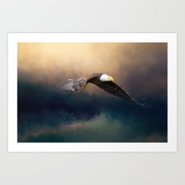 Painting flying american bald eagle Art Print