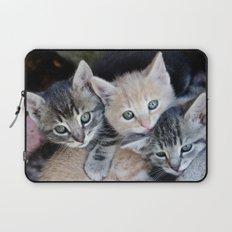 Kittens, 3 balls of tenderness Laptop Sleeve