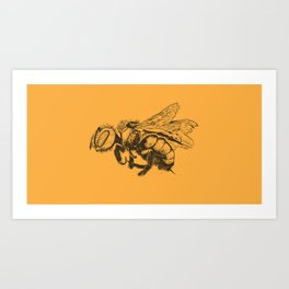 Arthropoda - Bumble Bee Art Print