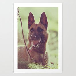 Malinios Beauty dog picture Art Print