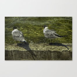 Sitting on the Seawall Canvas Print