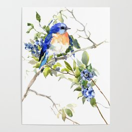 Bluebird and Blueberry Poster