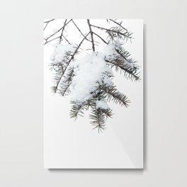 Snowy Spruce Needles 6 Metal Print