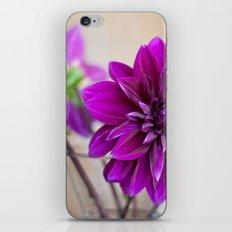 dahlias iPhone & iPod Skin