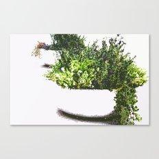 Garden plant Canvas Print