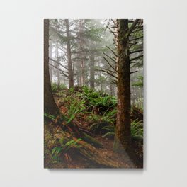 Where the Redwoods Grow Metal Print