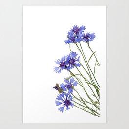 Slant blue cornflower flowers Art Print