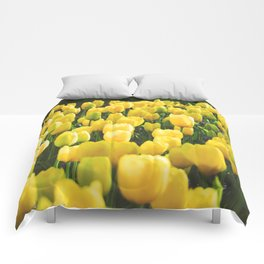 Tulips field 32 Comforters