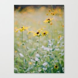 Daisy No. 3 Canvas Print