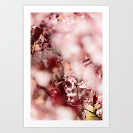 Spring in my Life - Blooming Blossom Art Print
