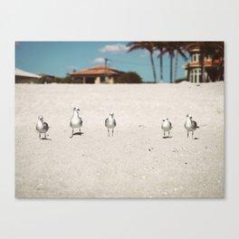 Seagulls in a Row Canvas Print
