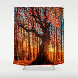 Majestic woods Shower Curtain