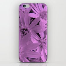 Pink Daisies iPhone & iPod Skin