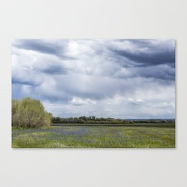Field of Camas and Dandelions, No. 2 Canvas Print