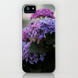Big Hortensia flowers in front of a window iPhone Case
