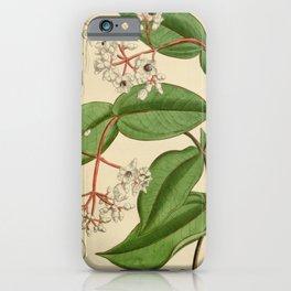 Flower 6730 medinilla curtisii iPhone Case