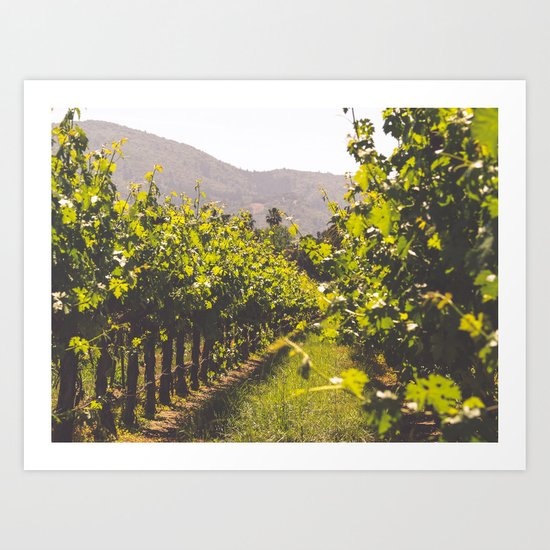 Vineyards 4 Art Print