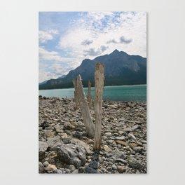 Tree Stump beach Canvas Print