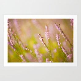Soft focus of pink heather macro Art Print