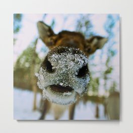 The North | Reindeer's Nose Metal Print
