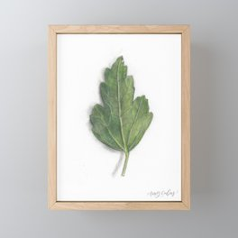 Leaf Study II Framed Mini Art Print