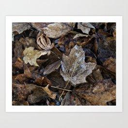 leaves on the ground Art Print