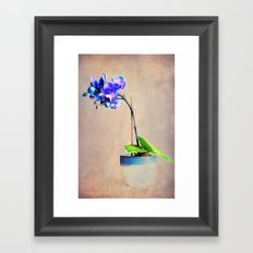 blue Orchid Framed Art Print