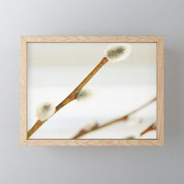 Willow branch with catkins Framed Mini Art Print