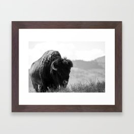 Black and White Bison Framed Art Print