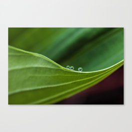 Three little drops Canvas Print
