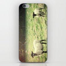 Dedicated Followers iPhone & iPod Skin