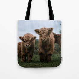 Scottish Highland Cattle Calves - Babies playing II Tote Bag
