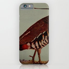 Vintage Print - Birds and Nature (1906) - Mountain Partridge iPhone Case