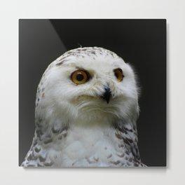 Owl_20180205_by_JAMFoto Metal Print