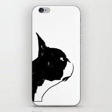 Boston Terrier Dog Art iPhone & iPod Skin
