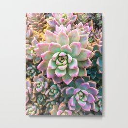closeup green and pink succulent plant background Metal Print