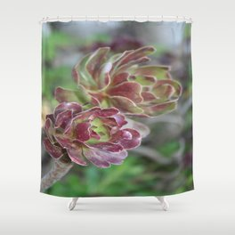 Close Up Of Succulent With Garden Background Shower Curtain