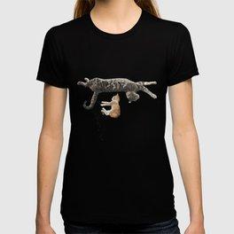 Kitten Nap T-shirt