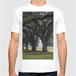 Tree Arch Drive T-shirt
