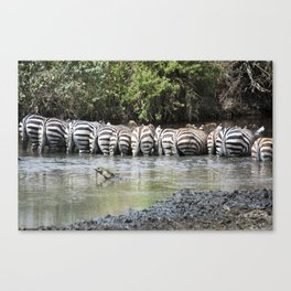 zebras in a line, Serengeti National Park, Tanzania Canvas Print
