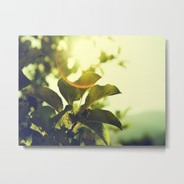 Morning Light Shining Through Branches Of Leaves Nature Photography Metal Print