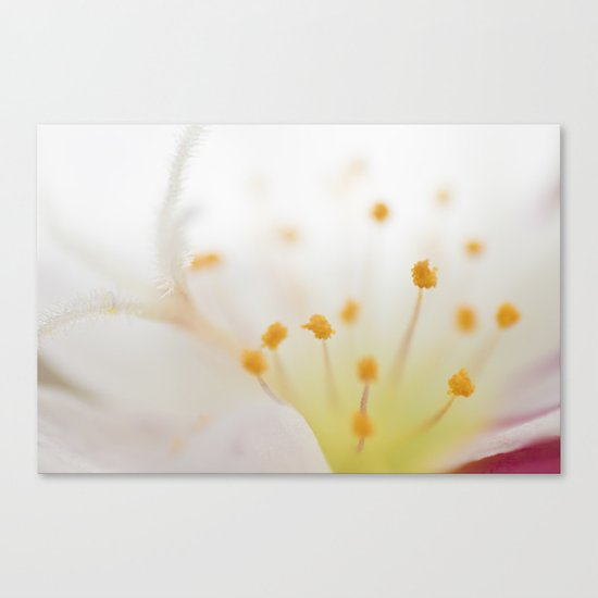 Mornings Canvas Print
