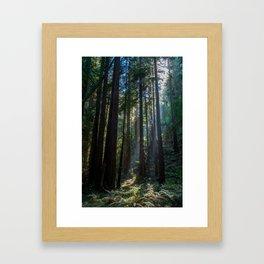 Red Woods & Sun Rays Framed Art Print