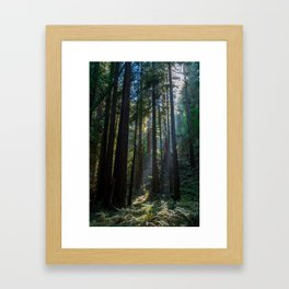 Red Woods & Sun Rays Framed Art Print